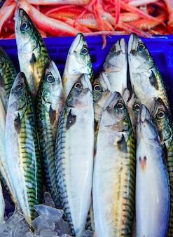 Pesce sgombro mediterraneo impilato