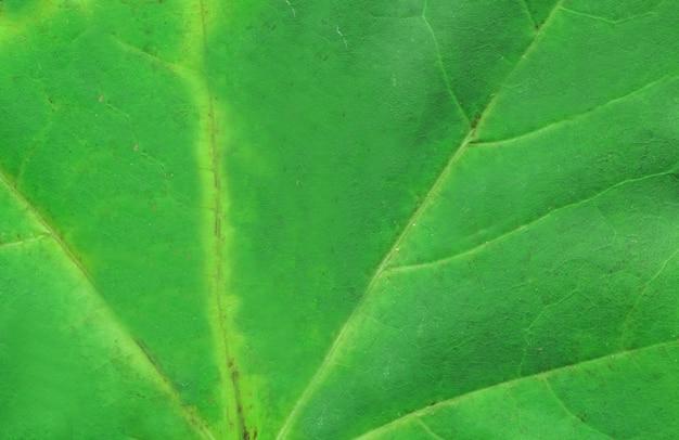 Macro della foglia dell'albero di verde di autunno