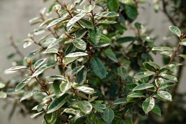 Macro dettaglio di nuove foglie in primavera