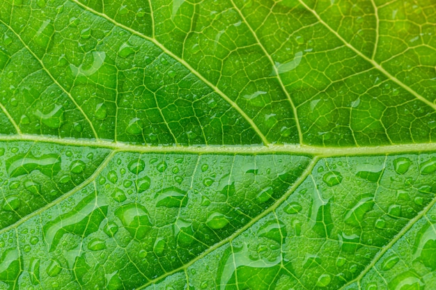 Macro foglie verdi e gocce d'acquafoto ravvicinata di gocce d'acqua su una foglia verde