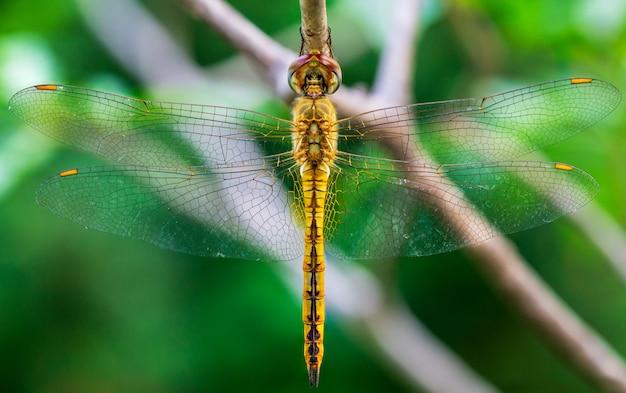 Maschera a macroistruzione dell'inscet della libellula che appende sul piccolo ramo
