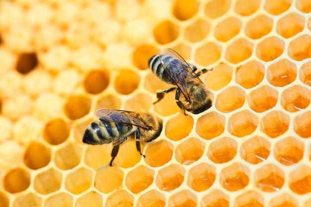 Foto a macroistruzione di un alveare dell'ape su un favo con copyspace. le api producono miele fresco, sano.