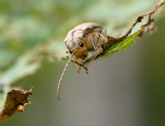 Macrofotografia di un coleottero