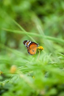 Ripresa macro di una farfalla monarca su un fiore giallo in un giardino