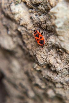 Colpo a macroistruzione di un insetto rosso sulla terra