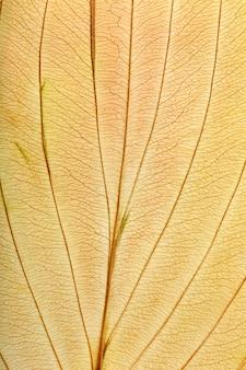 Macro texture di piante a foglia secca per lo sfondo. dettagli erbario piatto.