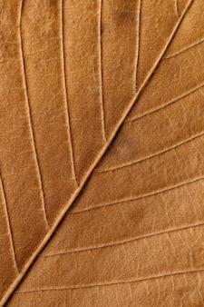Macro texture di piante a foglia secca per lo sfondo.