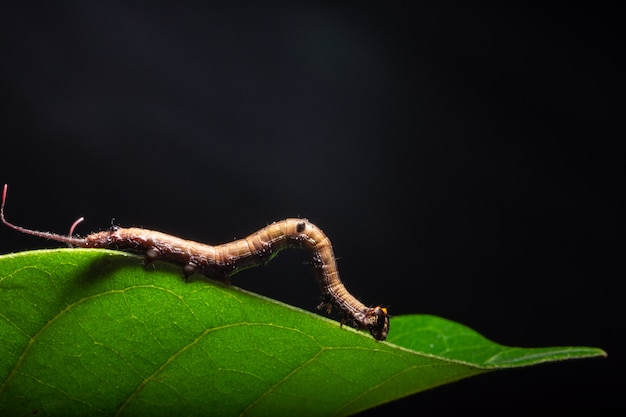 Macro verme sulla pianta.
