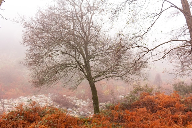 Foresta magica e misteriosa pietre di felci arancioni con querce muschiate verdi e viti nella nebbia