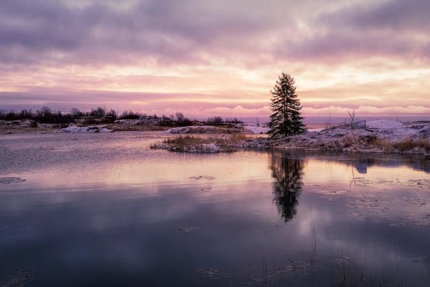 Un magico tramonto viola con un albero solitario su un'isola con un riflesso nell'acqua. le prime gelate.