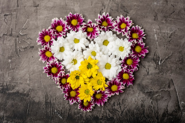 Magnifici fiori di crisantemo a forma di cuore su uno sfondo scuro