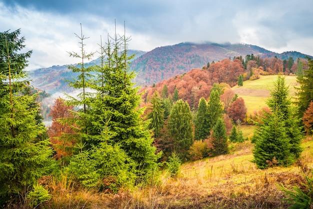 Magnifica collina nebbiosa con alberi di natale colorati