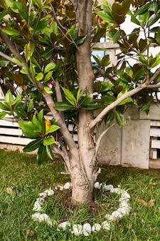 L'albero di magnolia con foglie verdi cresce nel cortile della casa su un'aiuola