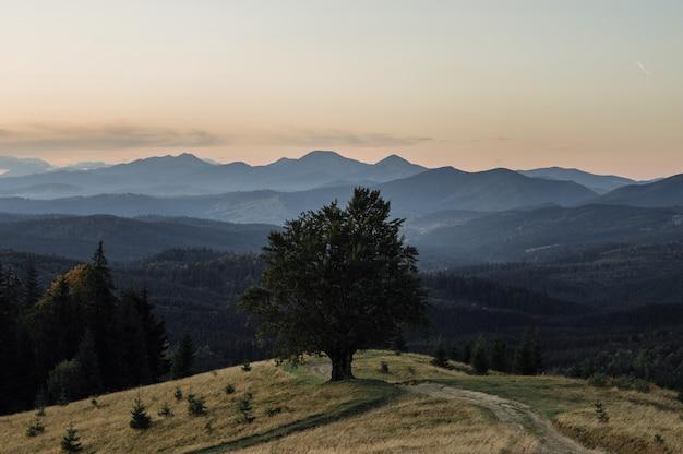 Maestoso faggio solo su un pendio di collina con raggi di sole a valle della montagna. drammatica scena del mattino colorato. foglie di autunno rosse e gialle. carpazi, ucraina, europa. mondo della bellezza.