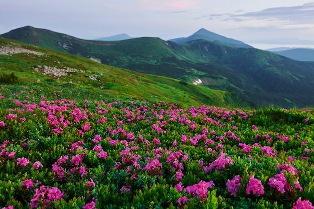 Maestose montagne dei carpazi. bel paesaggio. vista mozzafiato.