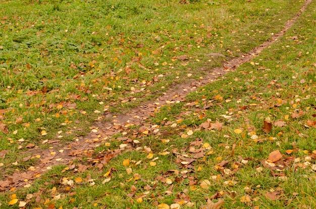 Maestosa foresta con fogliame caduto a terra. parco con travi soleggiate. bosco autunnale con strada sterrata