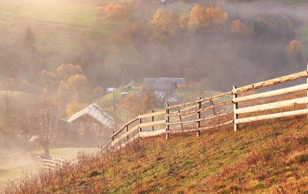 Maestoso paesaggio con alberi d'autunno nella foresta nebbiosa. carpazi, ucraina, europa. mondo della bellezza.