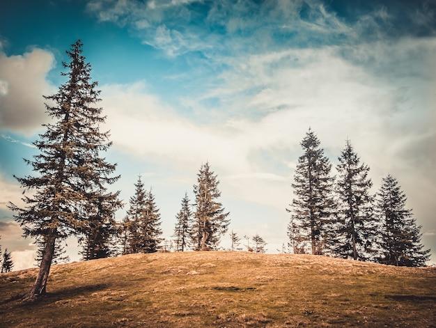 Alberi maestosi nella valle di montagna autunnale. scena mattutina drammatica e pittoresca. effetto tonificante caldo. carpazi, ucraina, europa. paesaggio di montagna del mondo di bellezza sullo sfondo del cielo blu