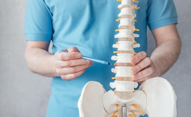 Mano del medico maschio che indica all'ernia intervertebrale sul primo piano del modello della colonna vertebrale dello scheletro, fisioterapista che punta al modello della colonna vertebrale in clinica