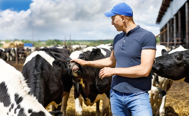 Coltivatore maschio sull'azienda agricola della mucca intorno alla mandria