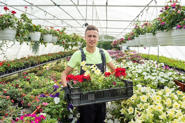 Giardiniere maschio sta trasportando fiori in cassa in serra industriale
