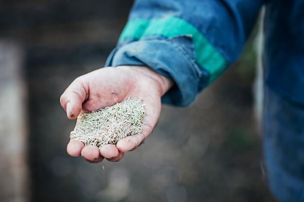 Le mani maschili tengono una manciata di semi per la semina da vicino