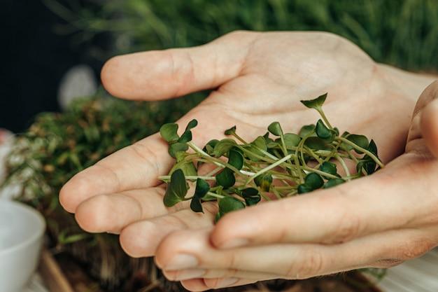 Il maschio passa la tenuta dei micro germogli verdi, fine su