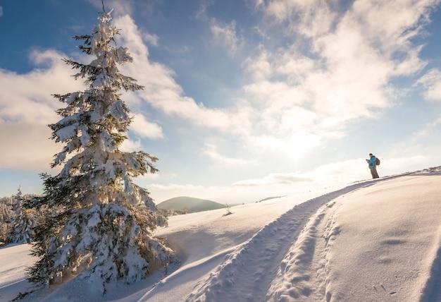 Viaggiatore maschio con uno zaino si trova sulla cima di una collina innevata accanto a un alto albero di abete rosso contro un cielo blu e nuvole bianche in una soleggiata giornata invernale gelida