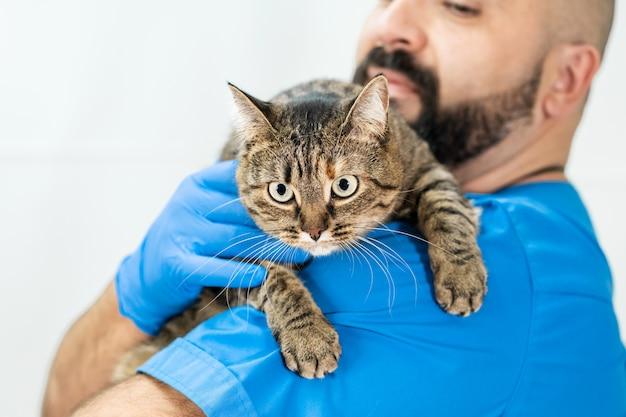 Il veterinario maschio tiene il gatto arrabbiato sulla sua spalla. gatto in una clinica veterinaria. diagnostica professionale salute degli animali domestici