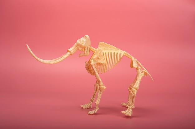 Scheletro di mammut con lunghe zanne