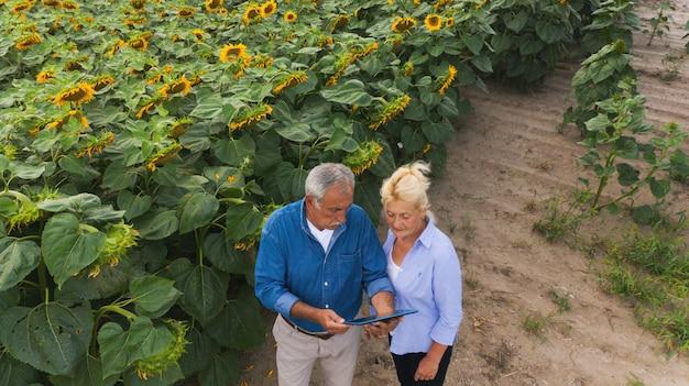 Equipaggi l'agricoltore agricolo con il computer digitale della compressa in un giacimento del girasole facendo uso delle app. tecnologie moderne in agricoltura
