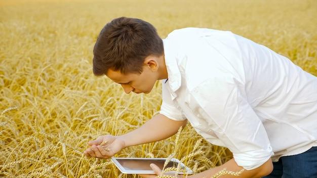 L'agronomo dell'uomo con una compressa esamina le spighe di grano nel campo