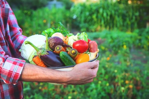 Un contadino tiene in mano un raccolto di verdure. messa a fuoco selettiva. natura.