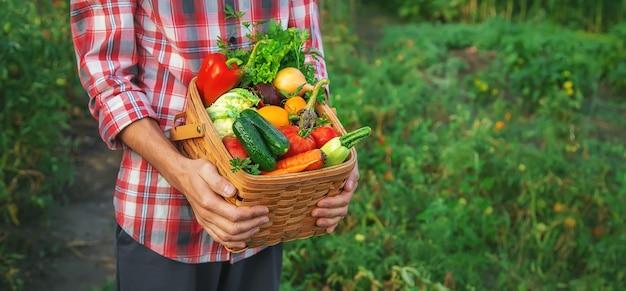 L'uomo agricoltore tiene un raccolto di verdure nelle sue mani