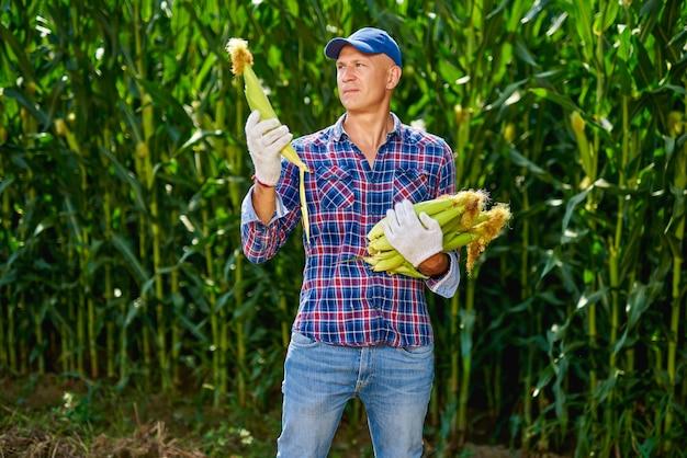 Agricoltore dell'uomo con un raccolto di mais.