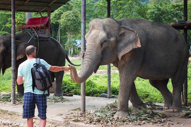 L'uomo nutre un elefante in un allevamento di elefanti in thailandia vista frontale