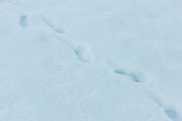 Orme dell'uomo sulla neve profonda bianca