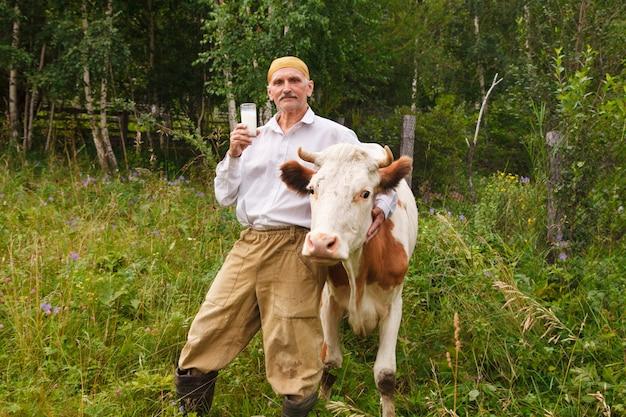 Un uomo sfiora una mucca in un prato verde. il bestiame mangia l'erba. il contadino beve il latte da un bicchiere. cibo sano: il latte del villaggio. un pensionato si prende cura del bestiame