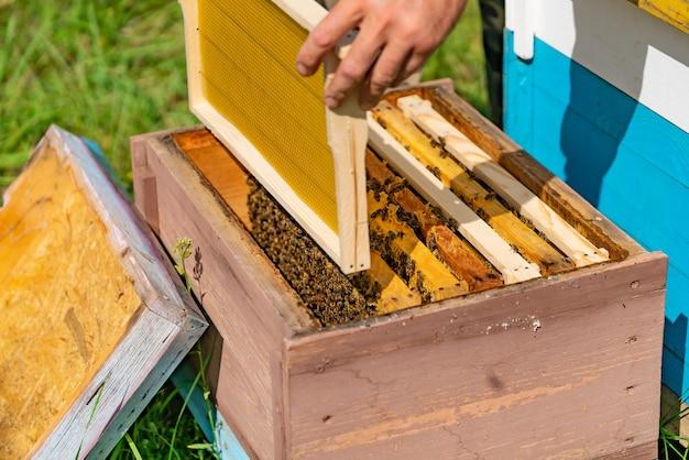 Man mano inserisce una cornice con nido d'ape nell'alveare in giardino durante il giorno