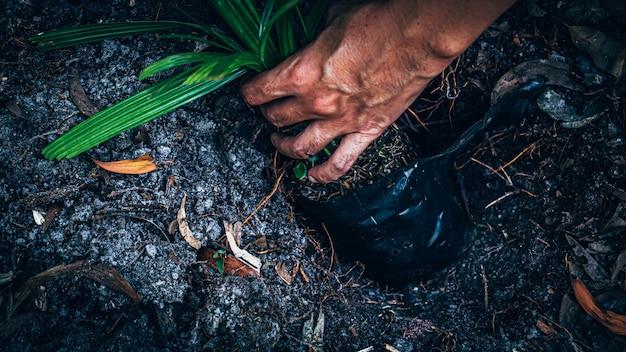 Pianta della mano dell'uomo per crescere nel terreno. uomo che tiene il germoglio e la semina nel terreno sul campo di lavoro. giardinaggio, pianta.