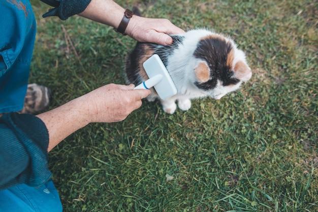 Mani dell'uomo che spazzolano il gatto dalla spazzola bianca