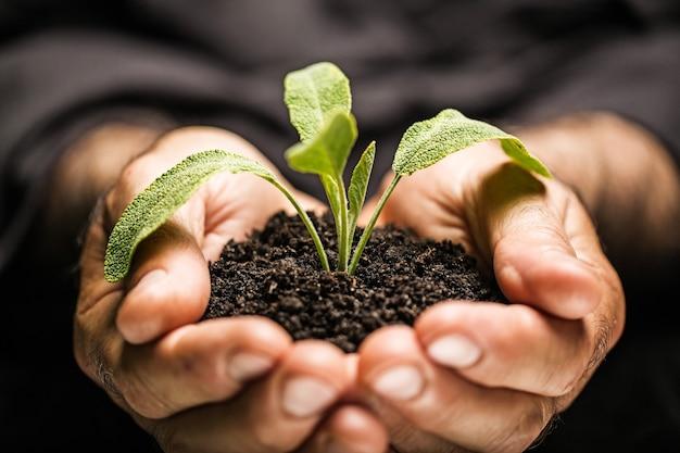 Mani dell'uomo che tengono una pianta verde