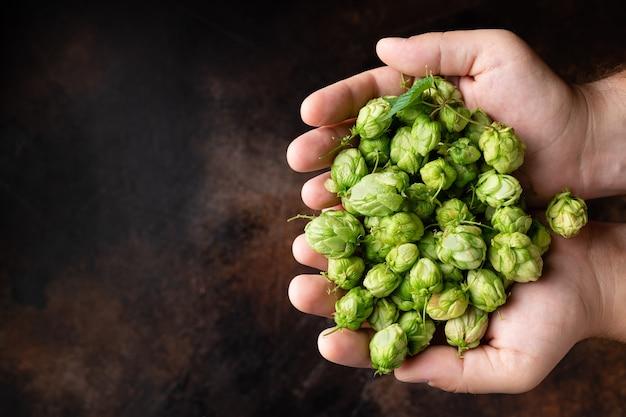 Mani dell'uomo con luppolo verde birra artigianale e concetto di birra