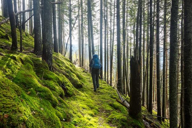 Uomo che fa un'escursione baia il sentiero nella foresta