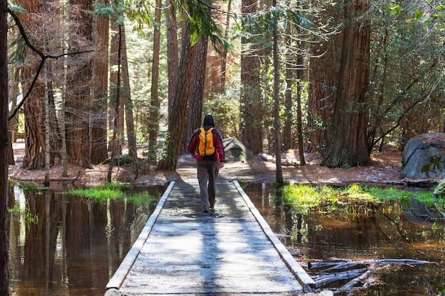 L'uomo escursionismo baia il sentiero nella foresta.