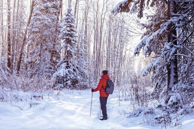 Uomo che fa un'escursione fuori nella foresta di inverno soleggiato. camminata nordica.