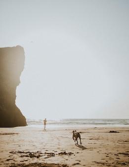 L'uomo e il suo cane giocano in spiaggia