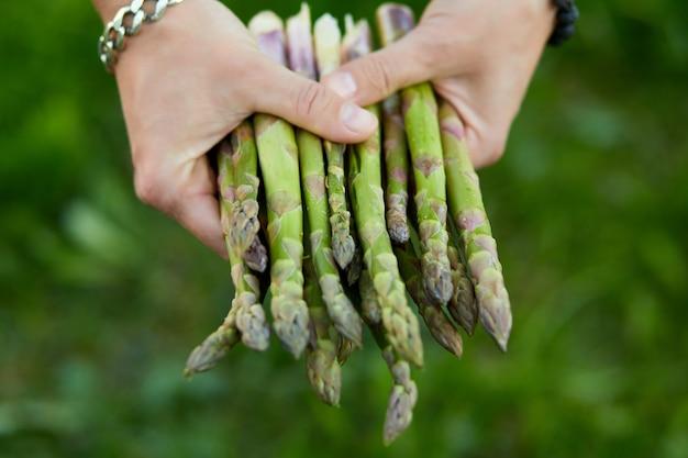Uomo che tiene un mucchio di asparagi verdi nelle sue mani all'aperto, lance di asparagi verdi freschi al sole, copia spazio per il testo. raccolto, pronto da cucinare, dieta vegana sana, cibo locale.