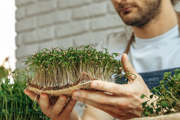 Uomo che tiene il cespuglio di microgreen nelle sue mani