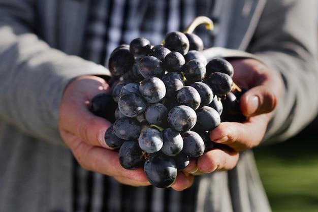 Uomo che tiene l'uva nelle sue mani